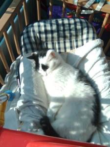 Binky slaapt in de sitter