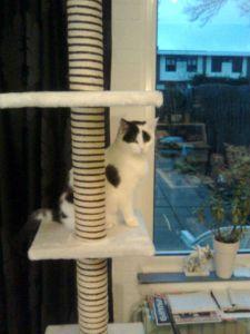 Binky hoog op de torenfix