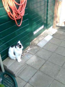 Binky staat op wachtfix
