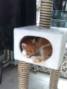 Grote Binky slaapt lieffix