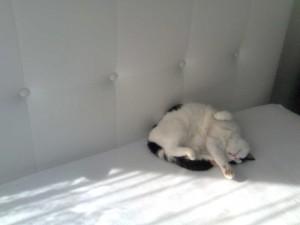 Binky bed