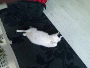 Binky yoga