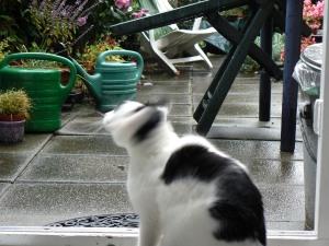 Binky rain