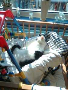 Binky in babystoel