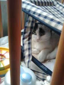 Binky sitter