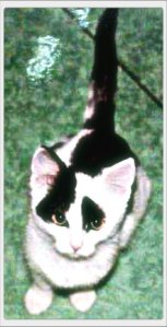 Binky Baby 2002a