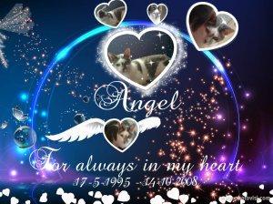 Angel memorie blog 2014