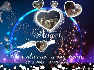 Angel memorie blog 2014