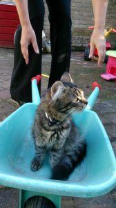 barrow-cat Pumba
