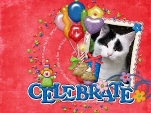 binky celebrate