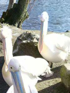 Selfies-pelikaanfix1