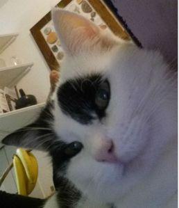 Sunday Selfie 9-11-2014.3