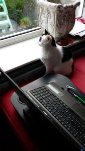 watches bird tv