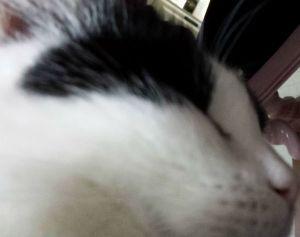 Selfie18-1.2
