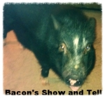 Bacon's show andtell