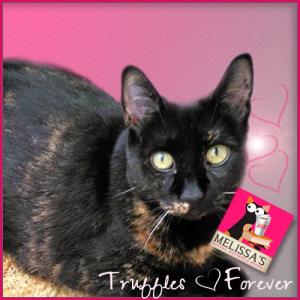 Truffles, Forever (Large)