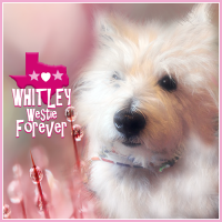Whitley Westie FOREVER