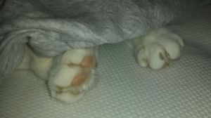 under paws out of blankie
