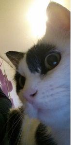 MIR-selfie0