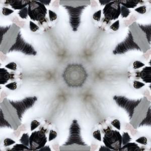 Binkyfunny.pho.to_kaleidoscope