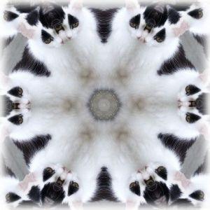 Binkykaleidoscoop