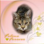 Feline, FOREVER Badge