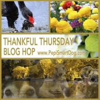 Thankful-Thursday-Wekly-Blog-Hop-Banner2