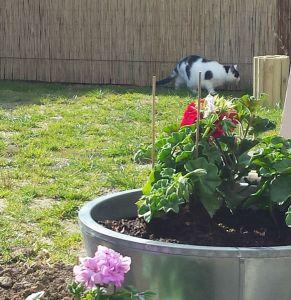 GardenArt