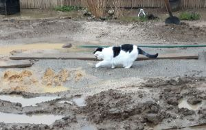 Garden-weathergirl