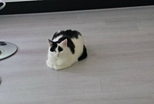 caturdayart-in-loaf