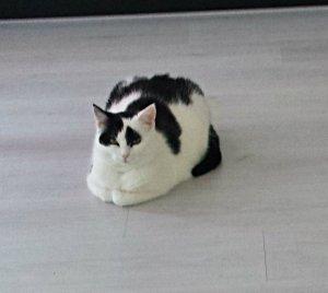 caturdayart-in-loaf