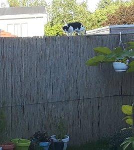 sundayselfieanotherones11-9-2016
