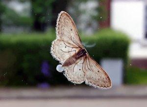 thankfulthursday22-9-2016 moth