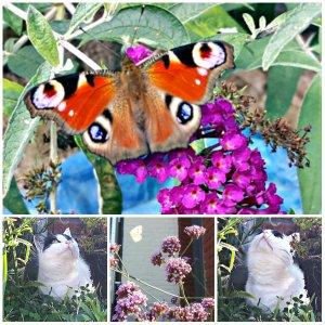 wwbutterflies14-92016