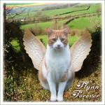 FLYNN Forever (A)