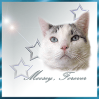moosey-forever-badge220