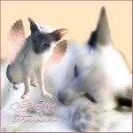 Nellie-Forever-1