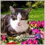 nerissa-forever-badge-ann