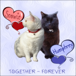 Snowie and Humphrey,FOREVER