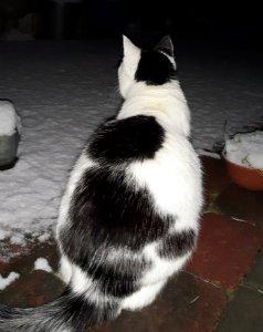 snowycaturdayart