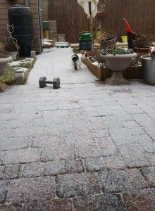 snowingcaturdayart