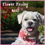FlowerFriday2017 (1)