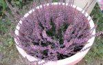 FlowerFriday
