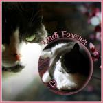 MADI Forever [PostSize]